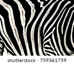 Zebra Pattern Texture Black...