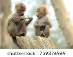 two cute baby baboon sitting on ... | Shutterstock . vector #759376969