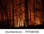 Small photo of Slow burn forest fire at night.