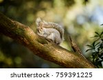 squirrel hiding in tree | Shutterstock . vector #759391225