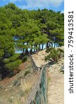 Small photo of A typically Mediterranean landscape with pine trees; picture taken in Sägest, Sicily (Italy)