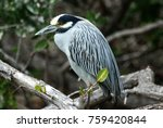 bird with yellow head in baja... | Shutterstock . vector #759420844