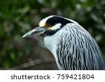 bird in baja california | Shutterstock . vector #759421804