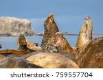 Southern Elephant Seals In...