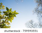 Green Leaves With Blue Sky In...
