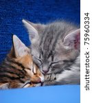 Stock photo two kittens sleep on a blue background 75960334