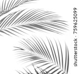 abstract of shadows palm leaf... | Shutterstock . vector #759625099