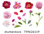 Collage Of Gentle Peony Flower...