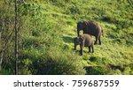 an elephant and her calf... | Shutterstock . vector #759687559