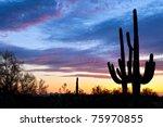 saguaro silhouetten in sonoran... | Shutterstock . vector #75970855