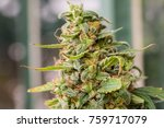 macro close up view of a...   Shutterstock . vector #759717079