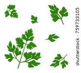 vector twigs of parsley | Shutterstock .eps vector #759733105
