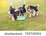 cute little beagles eating feed ... | Shutterstock . vector #759735901