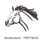 Stock vector horse head drawn with contour lines isolated on white background realistic outline drawing of face 759778231