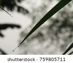 dew point on the grass | Shutterstock . vector #759805711