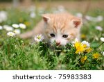 Stock photo young cat between flowers 75983383