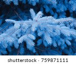 magic fairy like blue twigs of... | Shutterstock . vector #759871111
