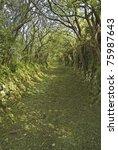 A Grassy Irish Country Lane...