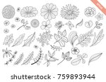 floral hand drawn doodle... | Shutterstock .eps vector #759893944