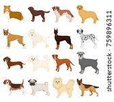 dog  pooch  breed  and other...   Shutterstock . vector #759896311