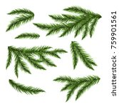 pine tree branches isolated on... | Shutterstock .eps vector #759901561