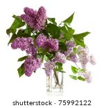 Bouquet Of Spring Purple Lilac...
