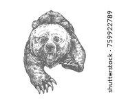 bear attack sketch of... | Shutterstock .eps vector #759922789