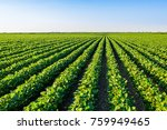 green ripening soybean field ... | Shutterstock . vector #759949465