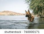 german shepherd dog is jumping... | Shutterstock . vector #760000171
