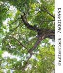 green leaf in the garden... | Shutterstock . vector #760014991