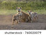 female spotted hyena with her... | Shutterstock . vector #760020079