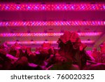 Small photo of Hothouse with agricultural cultures and led lighting equipment