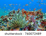 school of tropical fish on the... | Shutterstock . vector #760072489