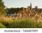 Backlit Golden Reed Near River...