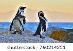 african penguins  spheniscus...   Shutterstock . vector #760214251