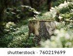 North Scandinavian Pine Forest...
