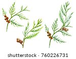 Set Of Small Green Twigs With...