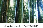 A Stand Of Bamboo Shoots With...