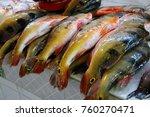 peacock bass  cichla  fresh... | Shutterstock . vector #760270471