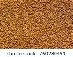 background grain barley  malt... | Shutterstock . vector #760280491