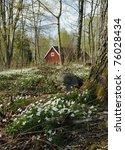 Flower Spring Meadow In Swedis...