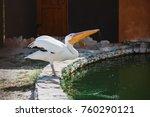 pelican near the pond | Shutterstock . vector #760290121