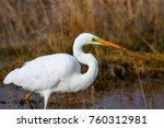big white heron. great egret.... | Shutterstock . vector #760312981