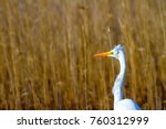 big white heron. great egret.... | Shutterstock . vector #760312999