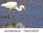 big white heron. great egret.... | Shutterstock . vector #760313029