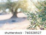 olive's trees garden ... | Shutterstock . vector #760328527