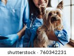 Stock photo cropped image of handsome doctor veterinarian and his attractive assistant at vet clinic are 760342231