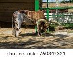 ankole watusi cattle   bos... | Shutterstock . vector #760342321