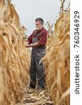 Small photo of Farmer or agronomist examining corn plant in field, harvest time