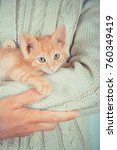 Stock photo cute little red kitten is sitting on his hands kitten in the hands red haired kitten soft tone 760349419